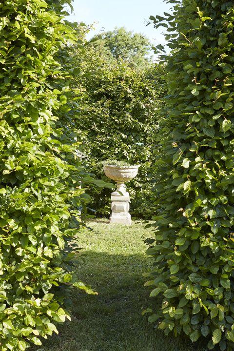an antique cast stone urn rises between hornbeam hedges