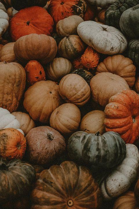 Winter squash, Natural foods, Cucurbita, Calabaza, Gourd, Pumpkin, Vegetable, Still life photography, Local food, Plant,