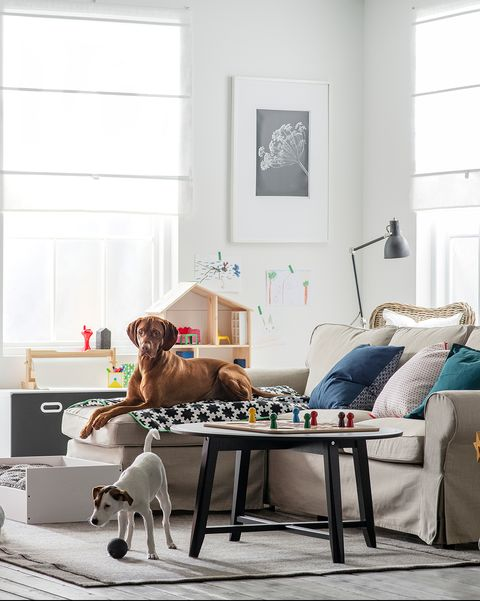 Salón de estilo nórdico con perros