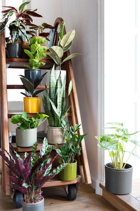 estantería tipo escalera con plantas de interior