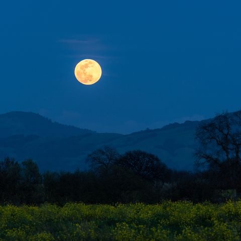 Rising Full Moon on the first day of Spring with Mustard plant in bloom and Oak trees, Sonoma County, California.