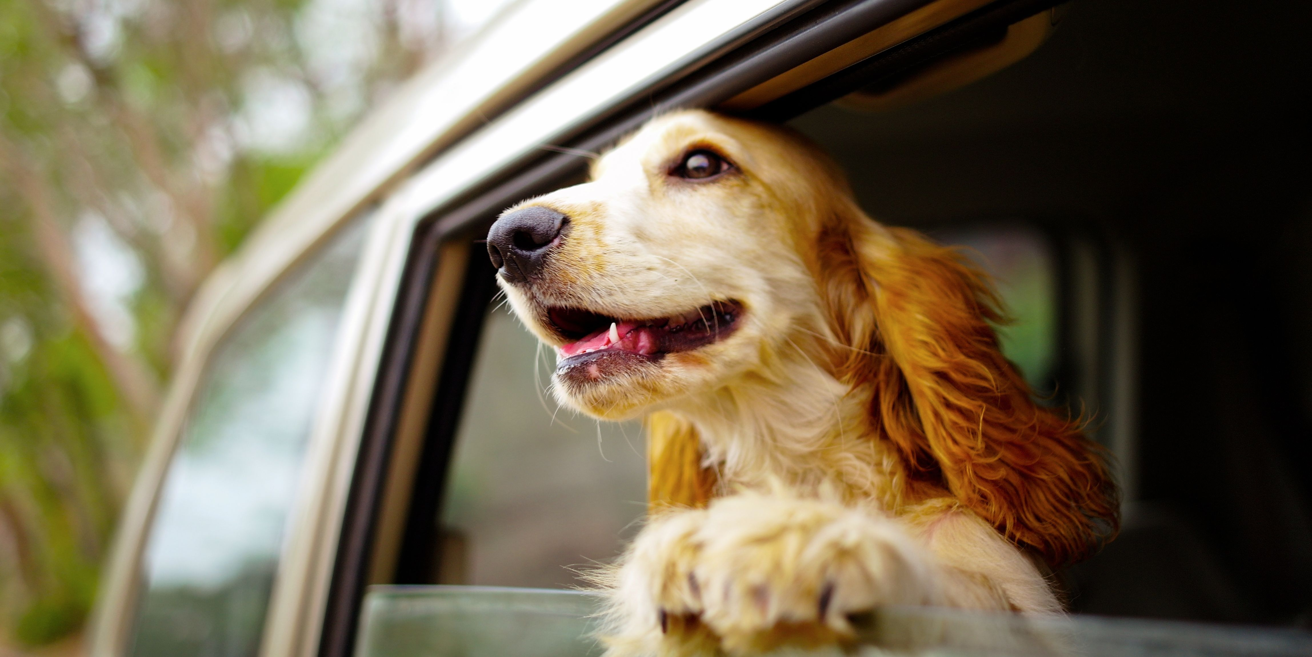 Everything You Need to Know About Road-Tripping with Your Dog