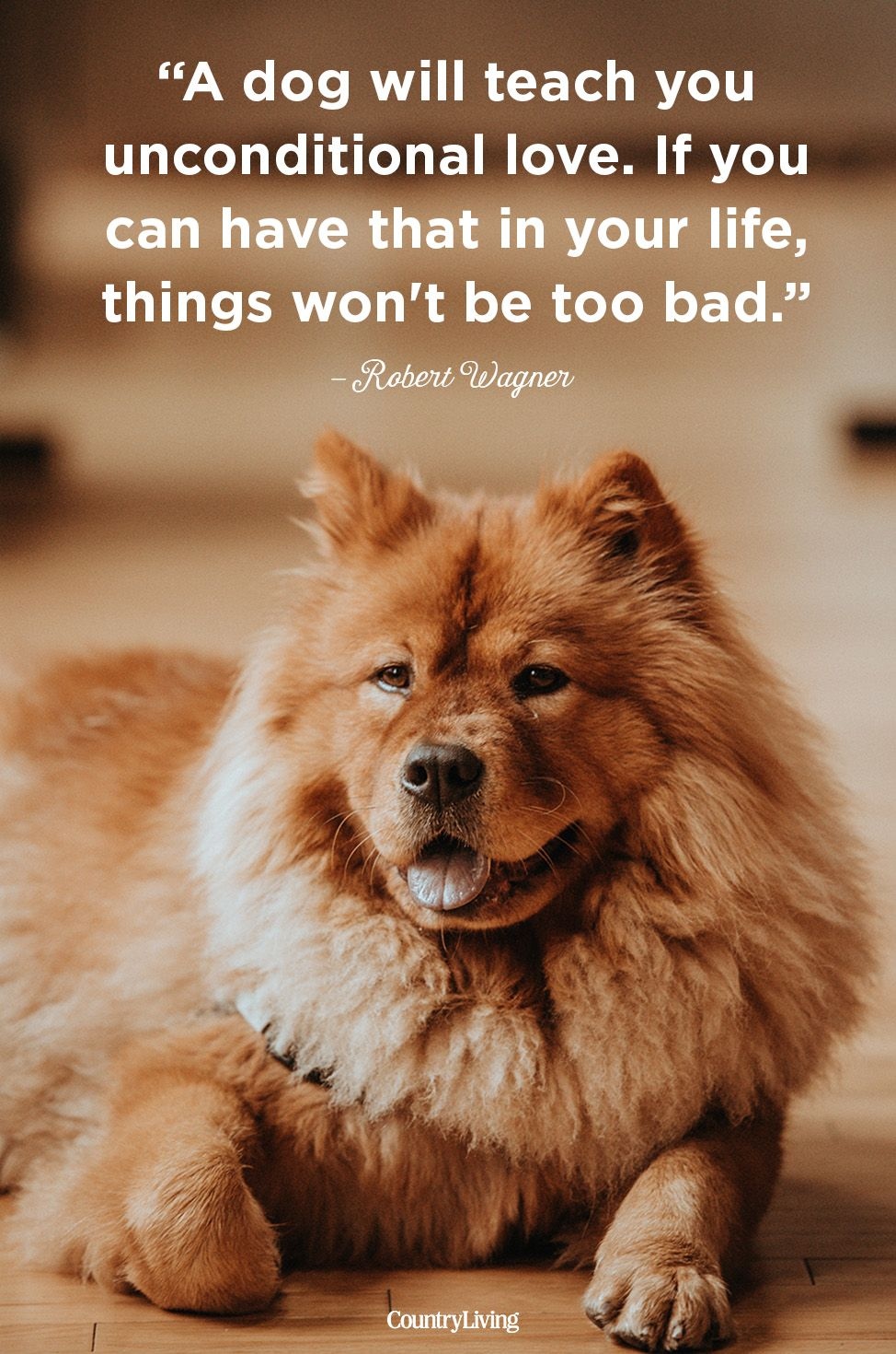 Dog food: a selection of quotes