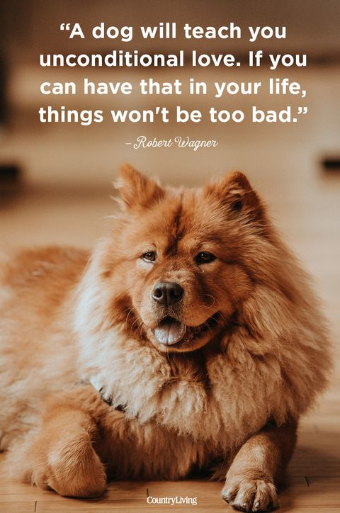 60 Cute Dog Love Quotes Puppy Sayings And Dog Best Friend Quotes Amazing Quotes About Dogs Love
