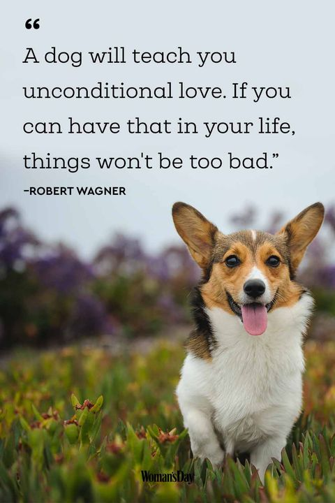 Funny Dog Quotes 20 Cute Sayings