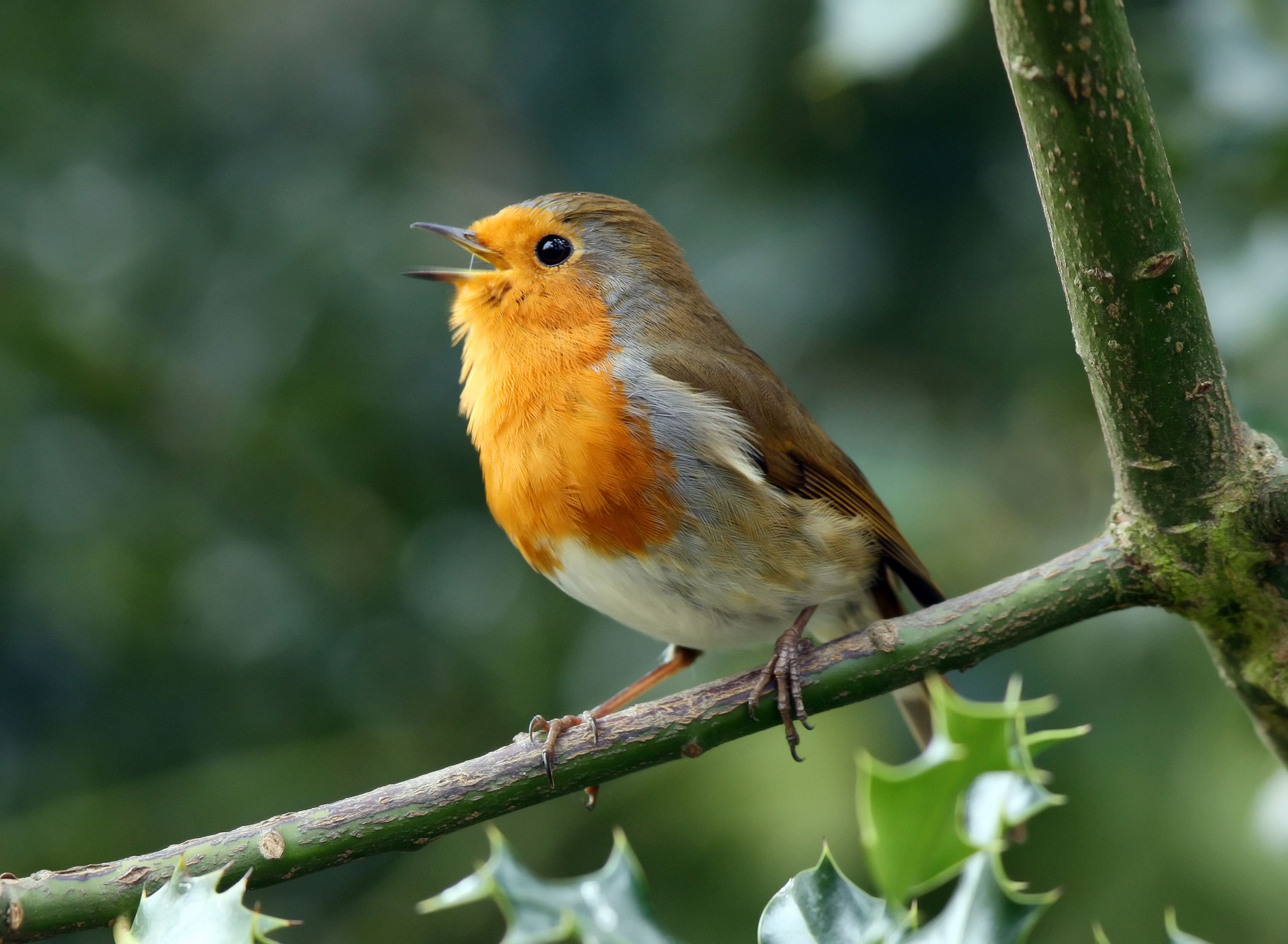 Thousands of UK locations will play soundtracks of birds singing tomorrow