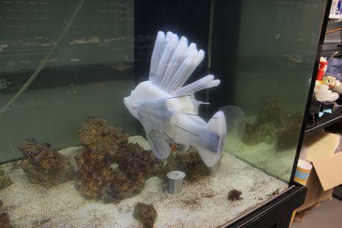 Organism, Aquarium, Fish, Fish, Aquarium decor, Freshwater aquarium, Glass, Tail,