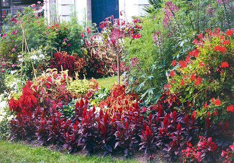 jardín con flores rojo y púrpura