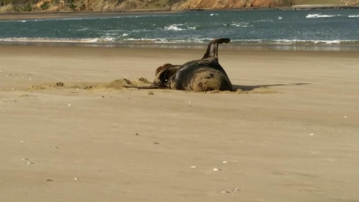 unknown usb shit sea lion feces scat