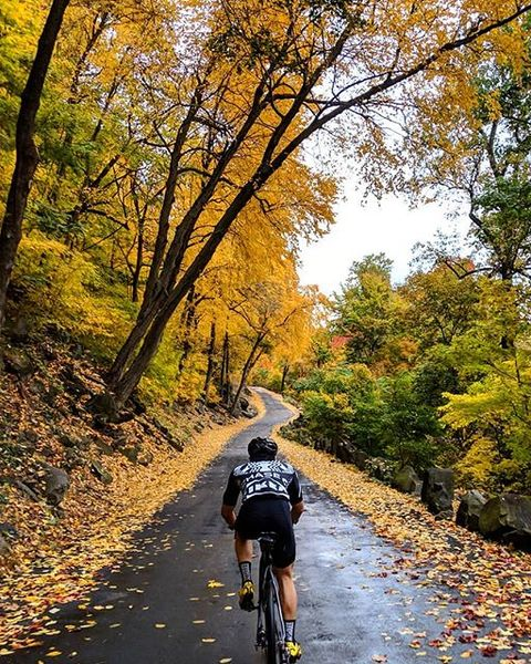 Cycling, People in nature, Tree, Cycle sport, Autumn, Yellow, Deciduous, Bicycle, Leaf, Outdoor recreation,