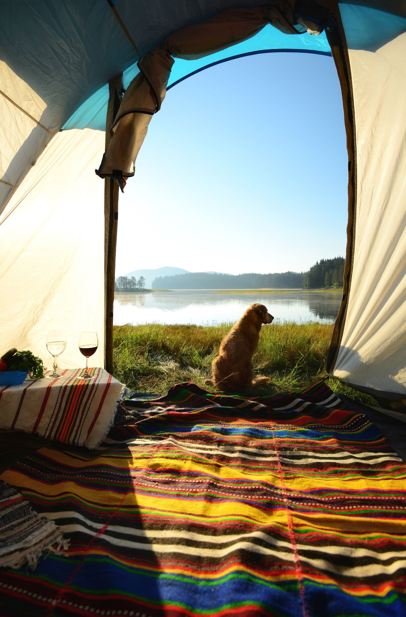 20 Camping With Dogs Tips and Ideas - Best Dog Camping Gear