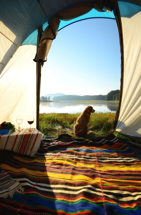 dog camping tent