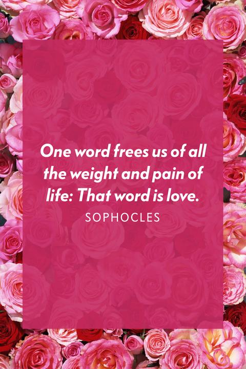 Pink, Garden roses, Rose, Text, Rose family, Flower, Petal, Font, Plant, Rose order,