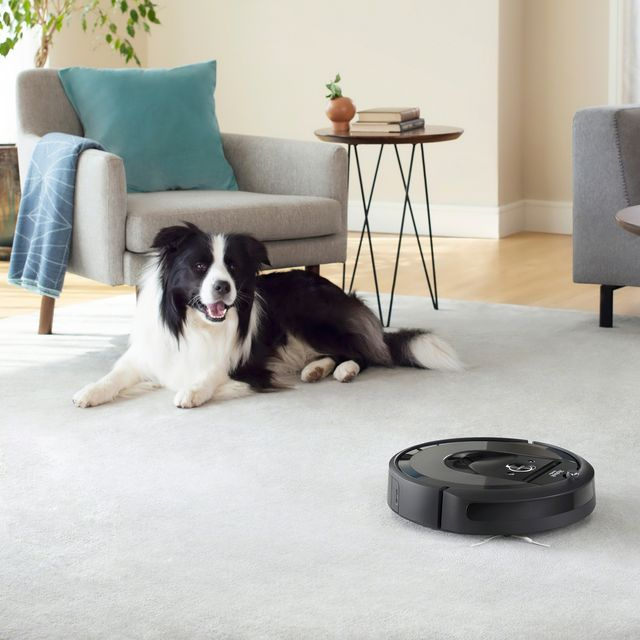 roomba on living room carpet with dog