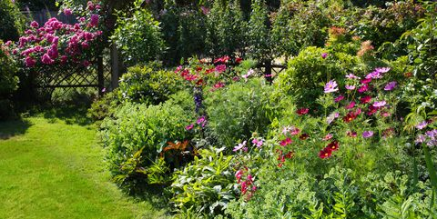 low maintenance shrubs and bushes