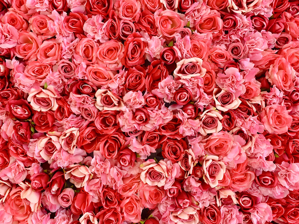 All of The Rose Color Meanings You Need to Know, Including Red Roses and Black Bouquets