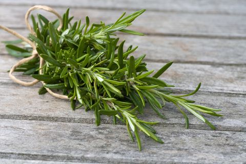 Rosemary - How to Grow Herbs Indoors