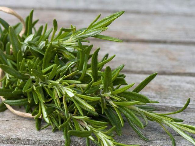 Plant, Flower, Rosemary, Herb, Rock samphire, Grass, Tarragon, Summer savory, Flowering plant, Fines herbes,