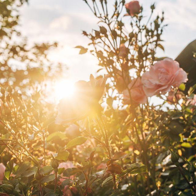 5 ways to help your garden survive a heatwave