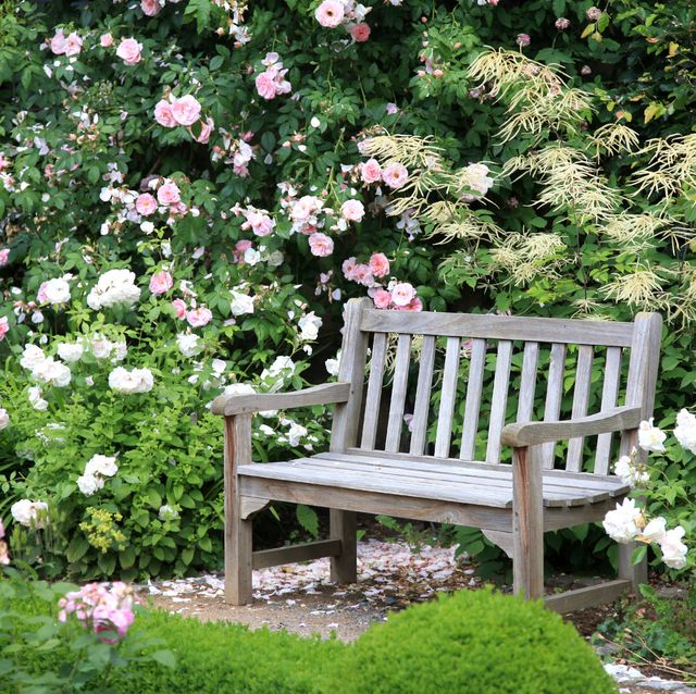 old wooden bench surrounded by beautiful rose bushes