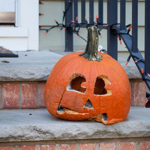 Image result for rotting pumpkin