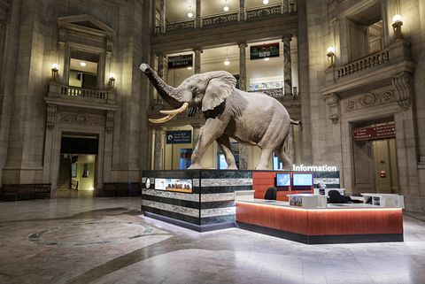 スミソニアン自然史博物館の1階ホールで出迎えてくれるアフリカ象の「ヘンリー」。