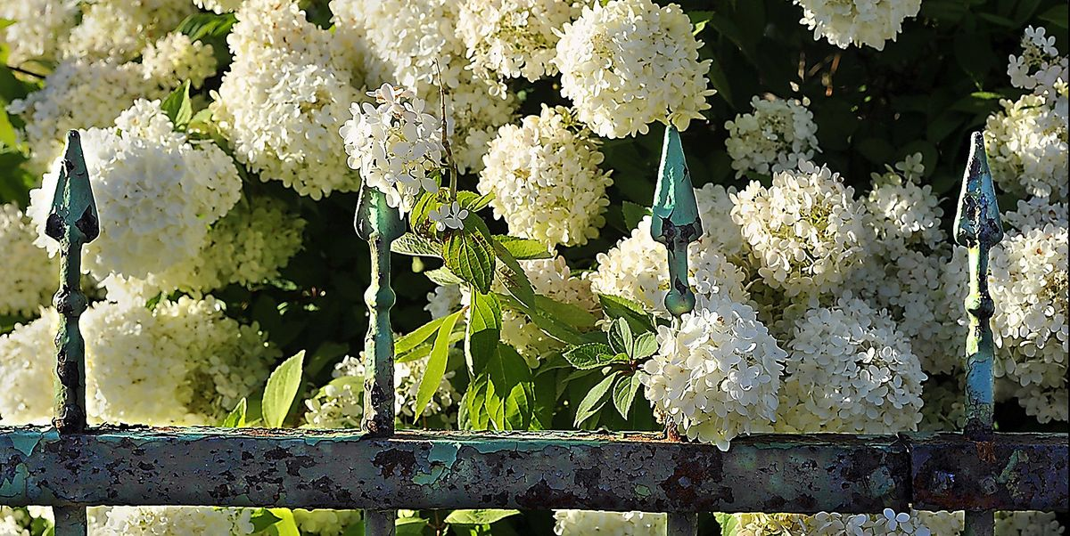 These Are the 23 Most Beautiful Flowering Shrubs to Plant in Your Garden