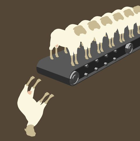 A row of sheep on a conveyor belt