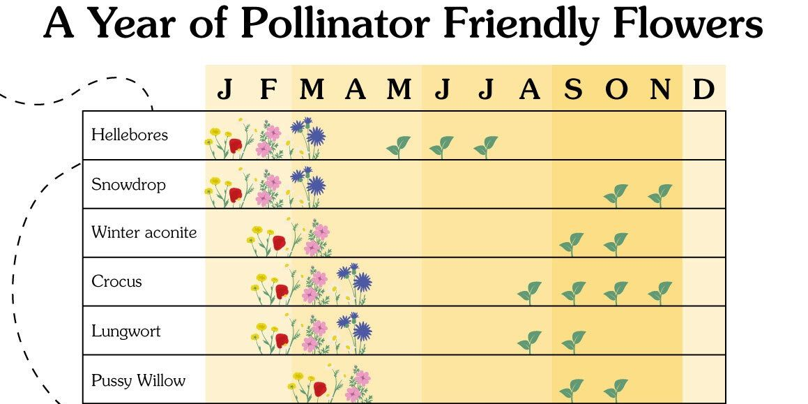 A month-by-month calendar of the best pollinator plants to grow