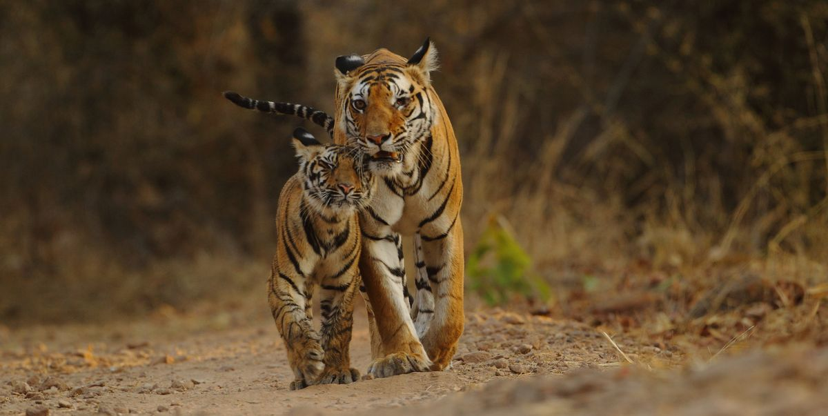 c4430c8943e9 Wildlife holidays in India are perfect for spotting these creatures