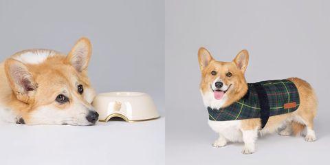 royal collection dog line