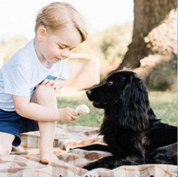Canidae, Dog breed, Dog, Companion dog, Carnivore, Cat, Puppy love, Puppy,