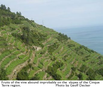 On the Road ... Running in the Cinque Terre region of Italy | Runner's World