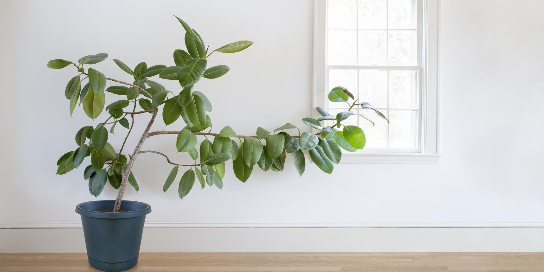 Beat the heatwave – these 5 houseplants will actually keep your home cool