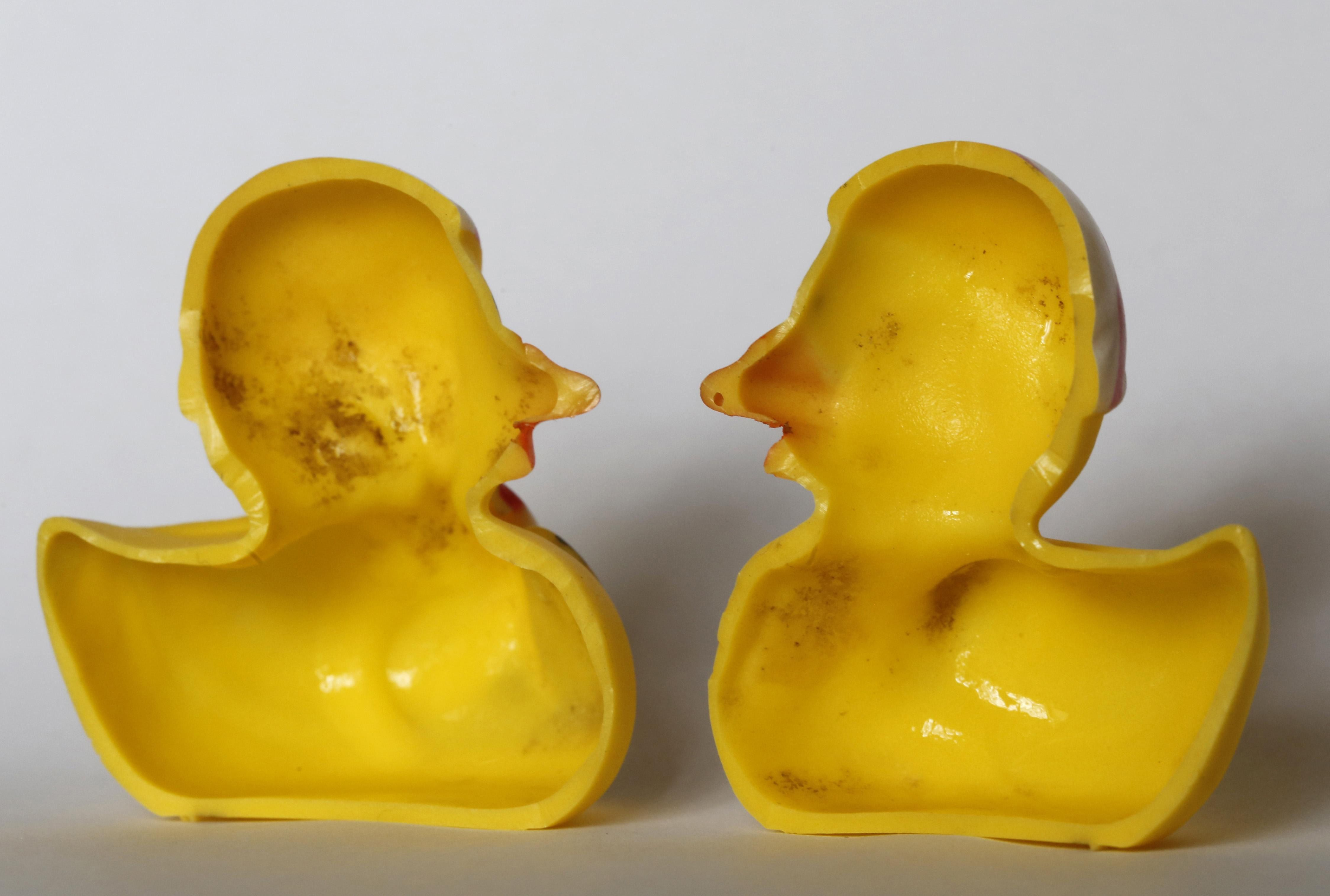 Rubber Ducks Can Breed Bacteria, According to New Study