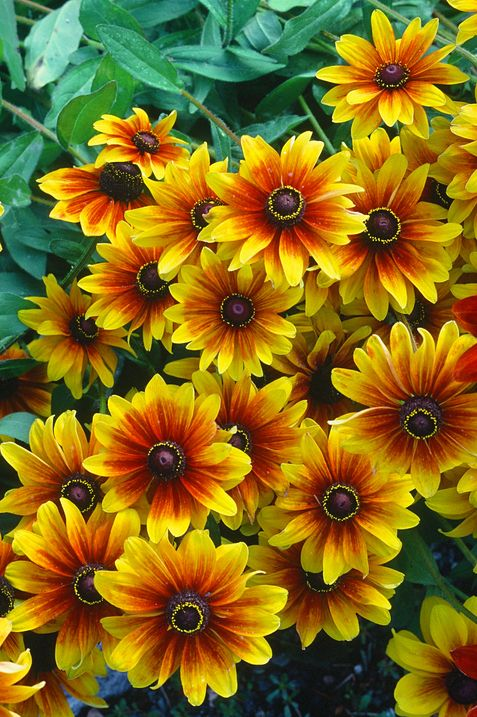 25 Best Fall Flowers For An Autumn Garden Prettiest Flowers To