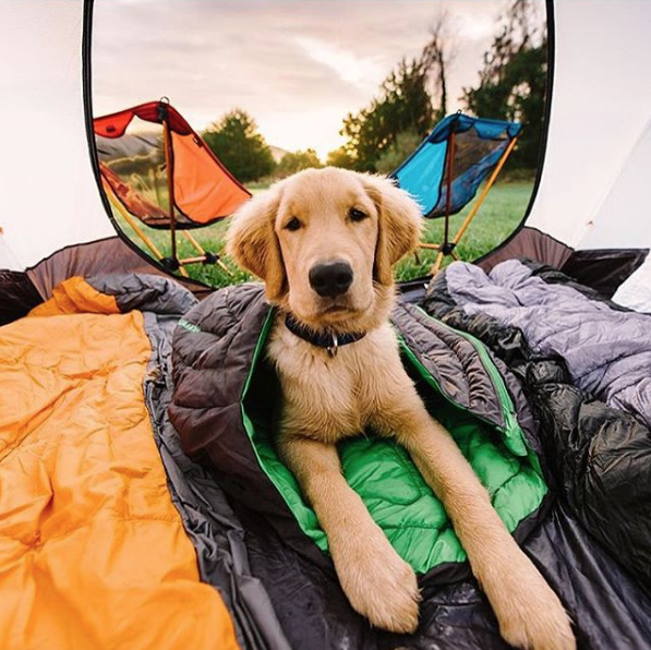 Ruffwear's Doggy Sleeping Bag Is Perfect for When You Take Your Pup Camping