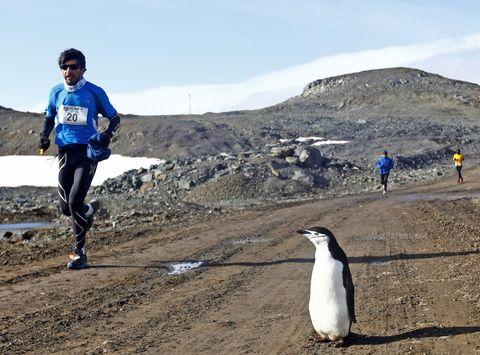 marathon antarctica