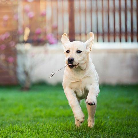 running dog at morning