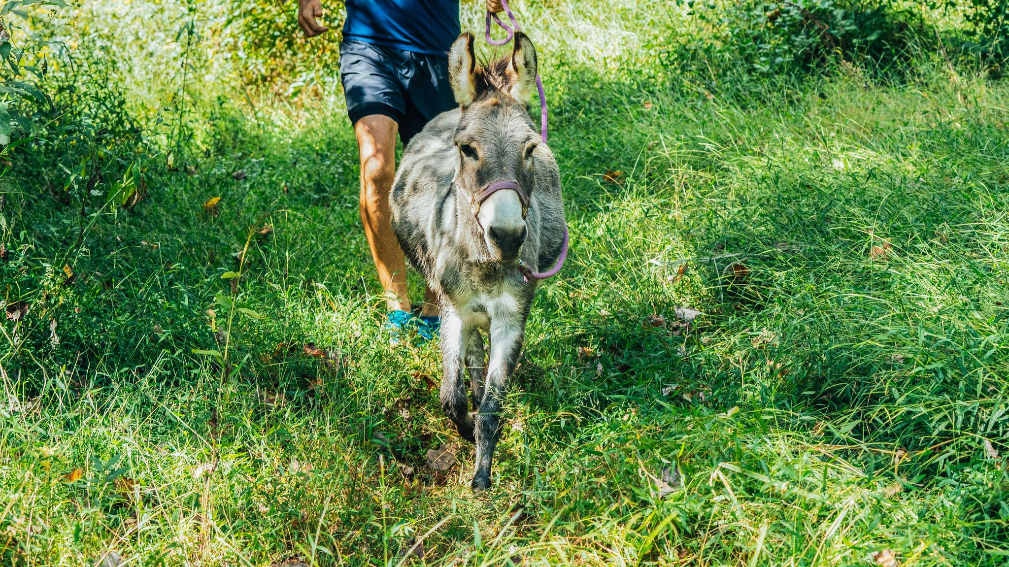 How This Rescue Donkey Became a Trail-Running Dynamo