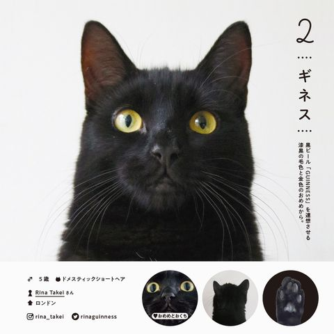 日本100隻貓圖鑑 ねこさま名鑑100