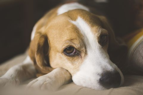 how your smartphone obsession is making your dog sad dog depression