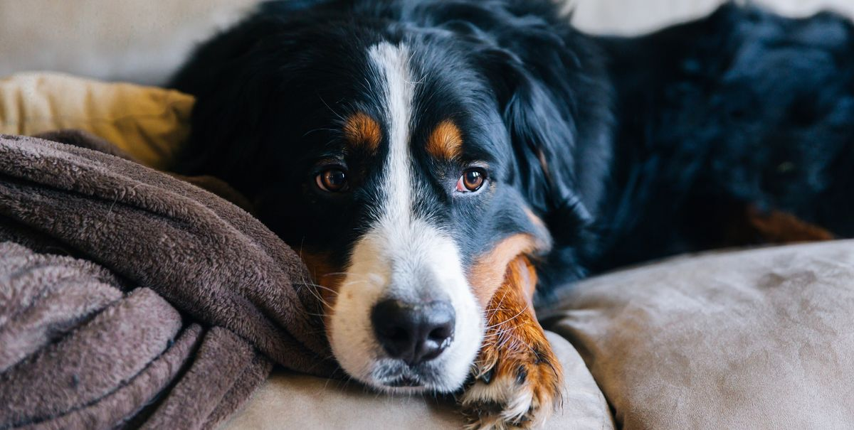 4 things you should do if you can no longer take care of your pet