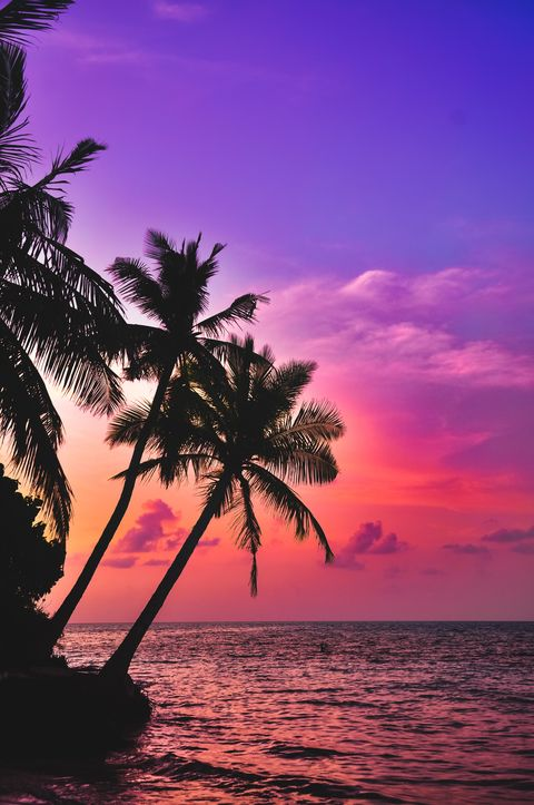 Sky, Tree, Tropics, Nature, Horizon, Afterglow, Palm tree, Sunset, Sea, Ocean,