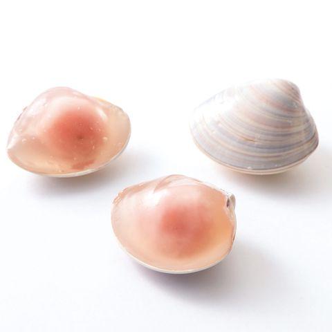 桜の手土産【和菓子編】