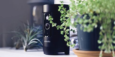 Product, Plant, Houseplant, Herb, Small appliance,