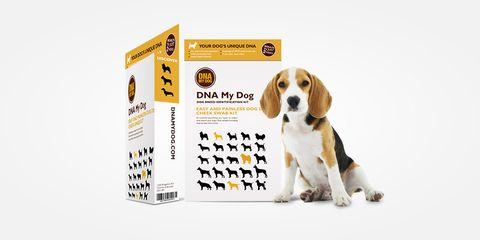Dog, Dog breed, Canidae, Beagle, Carnivore, Companion dog, Snout, American foxhound, English foxhound, Grand anglo-français tricolore,