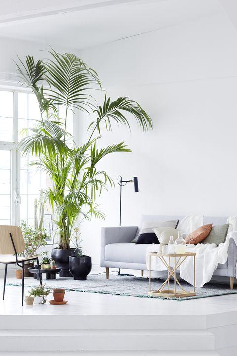 Salón decorado con plantas