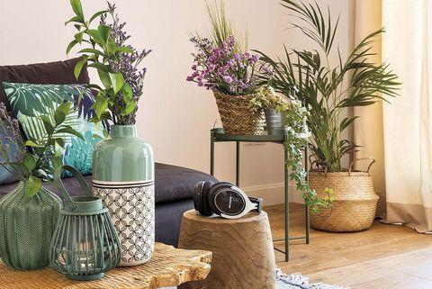decorar el salón con plantas