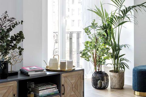 plantas de interior en el salón